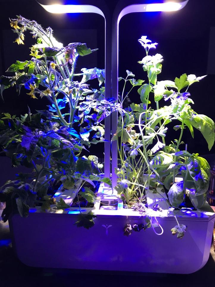 Véritable jardin d'intérieur (4)